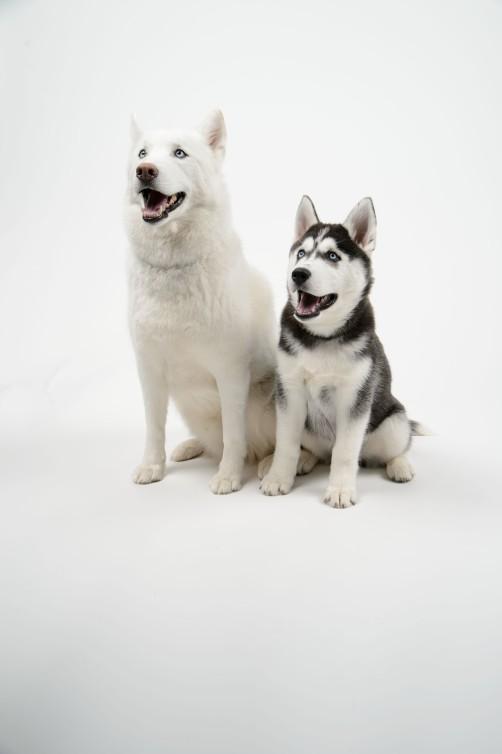 Dog140115a088(1)